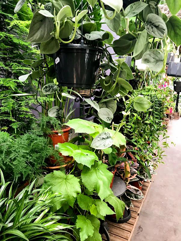 Flower Market 2.jpg